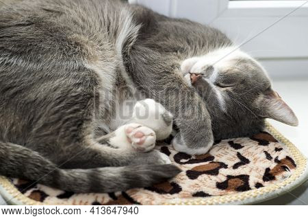 A Grey Cat Sleeps Curled Up On A Rug On A White Window. Background