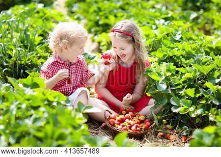 Kids Picking Strawberry On Fruit Farm Field On Sunny Summer Day. Children Pick Fresh Ripe Organic St