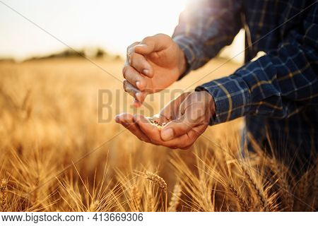 Closeup Of Farmer's Hands With Ripe Golden Grains. Agricultural Worker Stands In The Middle Of A Whe
