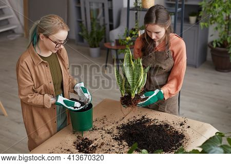 High Angle Portrait Of Two Young Female Florists Potting Plants While Working In Flower Shop Or Gard