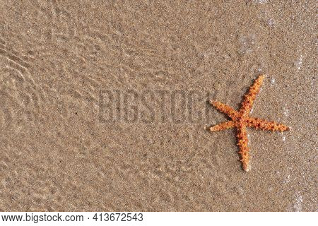 Closeup At Sea Starfish At Water At The Sand, View From The Top, Copy Space, Ocean And Sea Creatures