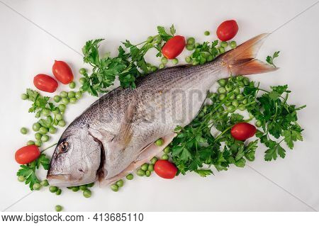 Whole Dentex Fish Ready To Cook Top View, Against White Background. Close Up Of Freshwater Seafood,