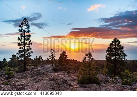 Dramatic Orange Sunset With Scenic Clouds In Gran Canaria. Brown Desert Rocks And Pine Trees. Nature