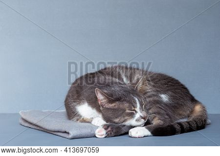 A Gray Cat With White Paws Curled Up Asleep On A Gray Blanket On A Gray-blue Background