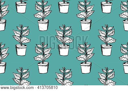 Outlined Ficus Plant In White Pot Vector Seamless Pattern. Hand Drawn Doodle House Gardening Pattern