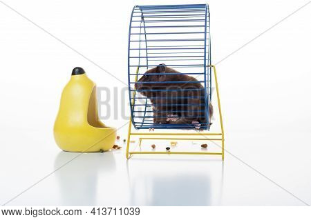 Domestic Hamster Sitting In A Wheel. Hamster And Iron Wheel. Isolate.