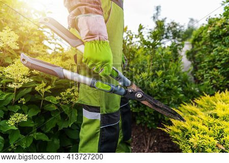 Professional Caucasian Gardener With Large Scissors In His Hands During Spring Time Garden Maintenan