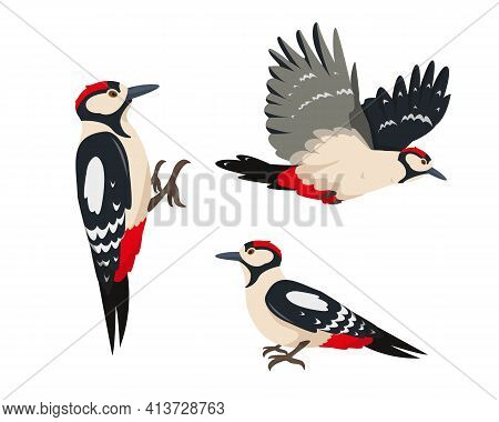 Set Of Bright Woodpeckers In Different Poses