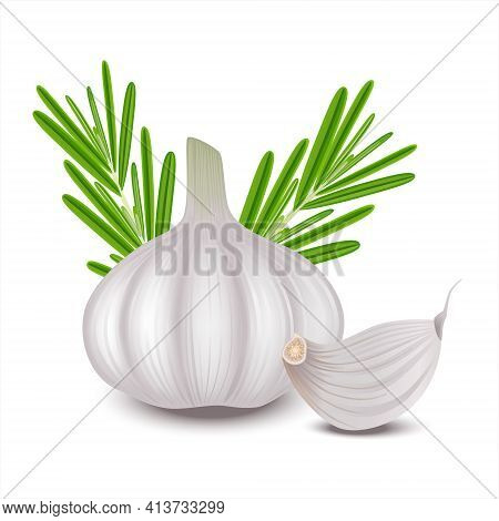 Raw Garlic, Clove Of Garlic And Rosemary Isolated On White Background. Realistic Vector Illustration