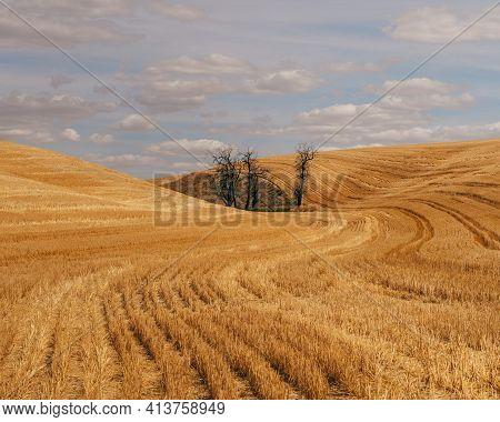 Rural Palouse Wheat Landscape Eastern Washington Country