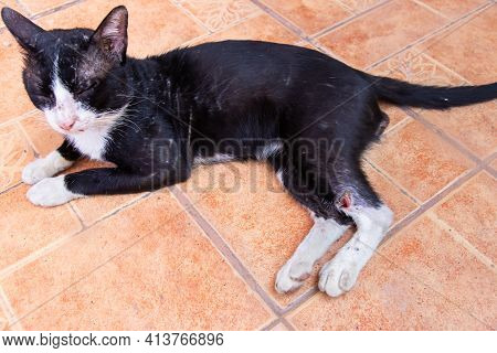 Wound On Stray Cat After To Fight,homeless Cat On The Floor