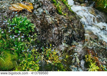 Scenic Background With Clear Spring Water Stream Among Thick Moss And Lush Vegetation. Mountain Cree