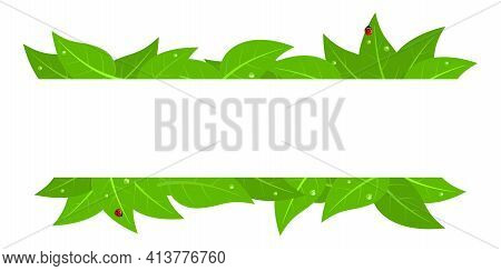 Frame With Red Ladybugs And Green Leaves With Water Drops Isolated