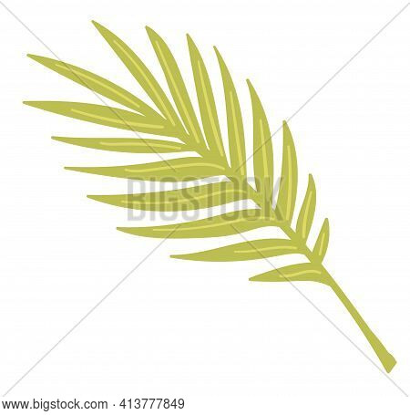 Monstera Leaf Tropical Plant, Exotic Botany Vector
