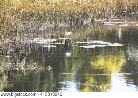 Reflection Of Surrounding Foliage On Pond Water