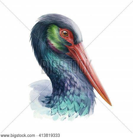Black Stork Beautiful Illustration. Wild Bird Realistic Portrait. Wild Bird With Red Beak Image. Bla