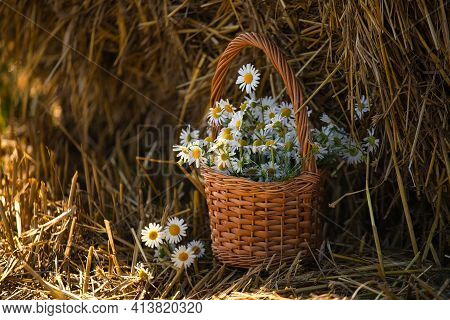 Daisies In A Basket On A Background Of Straw 2021