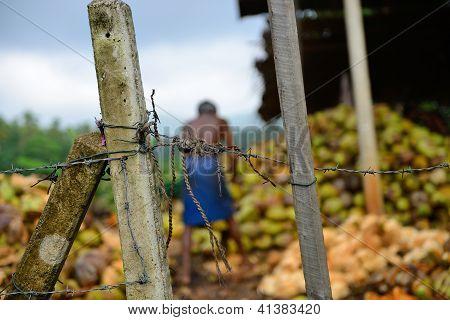 Slave Labor