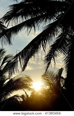 Sunset And The Silhouette Of Palm Trees
