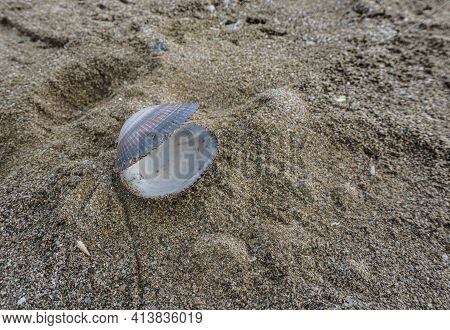 Open Empty Shell On The Sand. Lost Treasure Concept Free Space