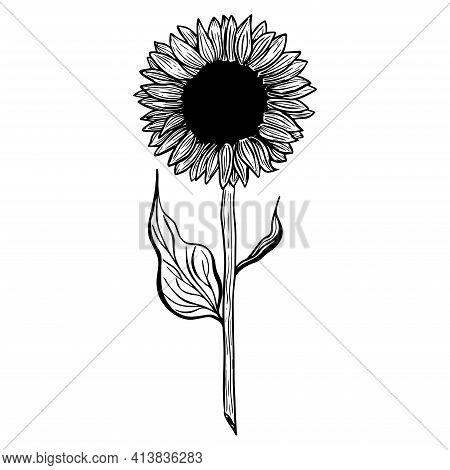 Sunflower Flower. Black And White Illustration Of A Sunflower. Linear Art. Hand-drawn Decorative Blo