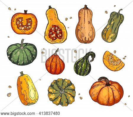 Different Types Of Pumpkins And Gourds. Autumn Collection Of Pumpkin Set Elements Design With Differ