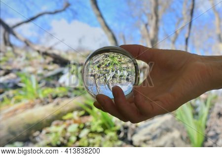 A Glass Round Lens Ball And Snowdrops Against Old Leaves In Spring Time