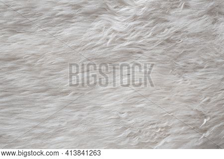 White Soft Sheep Fur, Sheep Wool, Wool Skin Texture