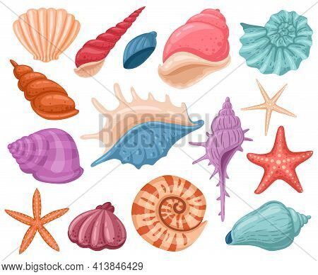 Cartoon Seashells. Summer Beach Sea Shells, Underwater, Ocean Reef Tropical Shells. Marine Beach She