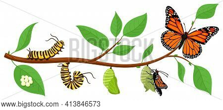 Butterfly Life Cycle. Cartoon Caterpillar Insects Metamorphosis, Eggs, Larva, Pupa, Imago Stages Vec