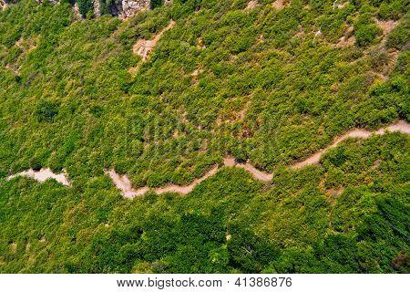 bush and path