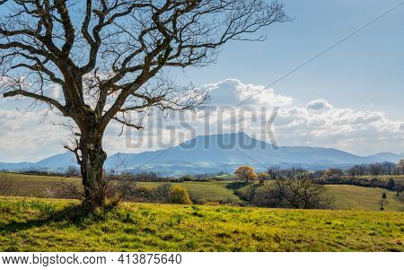 La Rhune mountain in the Basque Country, France. Winter season, a single tree in the forground.