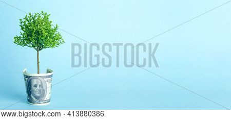 Money Tree On A Blue Background. Growing Tree From The American Dollar. Economy And Money Concept