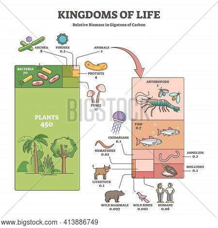 Kingdoms Of Life As Labeled Biological Nature Classification Outline Diagram