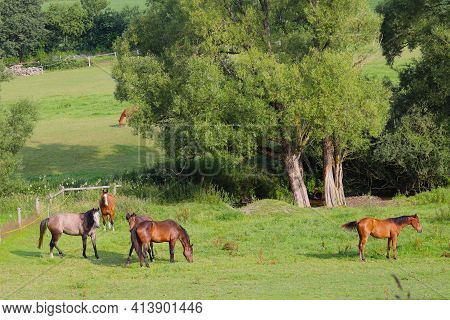 Horses In A Pasture In The Sauerland