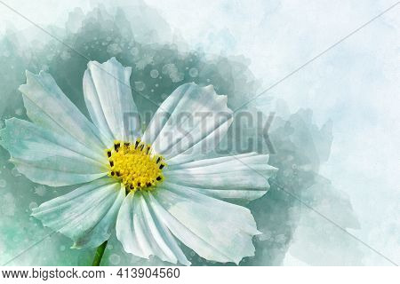 Watercolor Painting Of White Cosmos Flower - In Latin Cosmos Bipinnatus. Letter Head Or Greeting Car