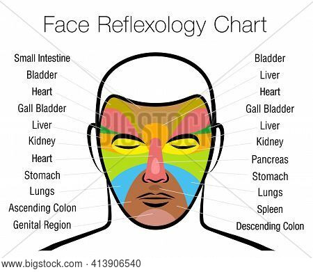Face Reflexology Chart. Alternative Acupressure And Physiotherapy Health Treatment. Zone Massage Cha