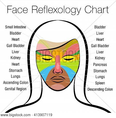 Face Reflexology Chart. Female Face With Colored Areas And Names Of Corresponding Internal Organs. A