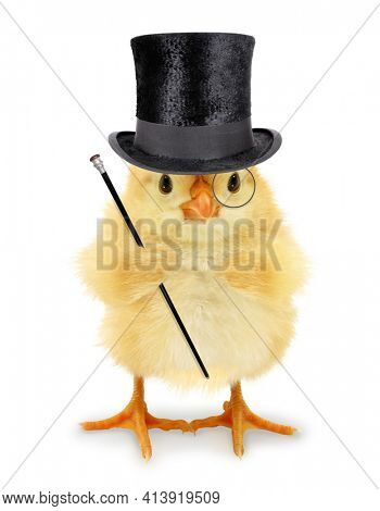 Cute cool chick rich man gentleman with walking stick and monocle funny conceptual image