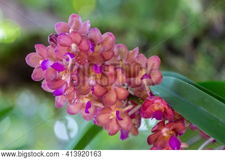 Orchid Flower. Flower In Garden. Flower At Spring Day. Colorful Flower. Flower Decoration. Flower Fo