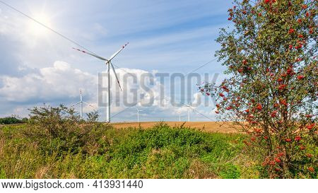 Red mountain ash and wind farm in the background