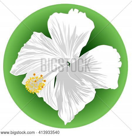 Close-up Image Of A Hibiscus White Flower On Green Background - Vector Illustration