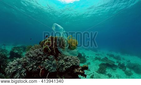 Coral Reef Fish Scene. Tropical Underwater Sea Fish. Colourful Tropical Coral Reef. Philippines.