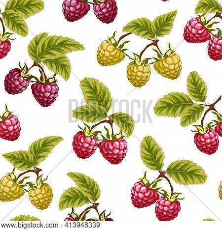 Vector Pattern With Multi-colored Raspberries.multicolored Raspberries With Leaves On A White Backgr