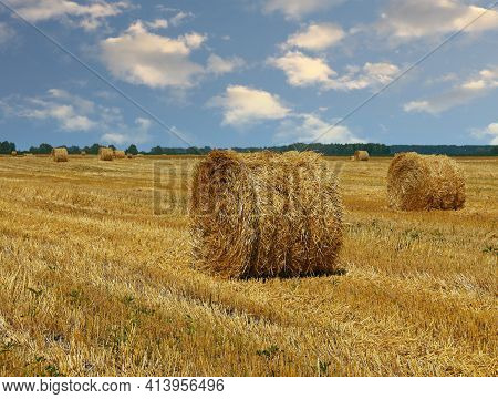 Yellow Golden Bales Of Wheat Hay Straw In Stubble Field After Harvesting Season In Agriculture, Low