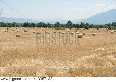 Landscape of a large hay field with straw bales