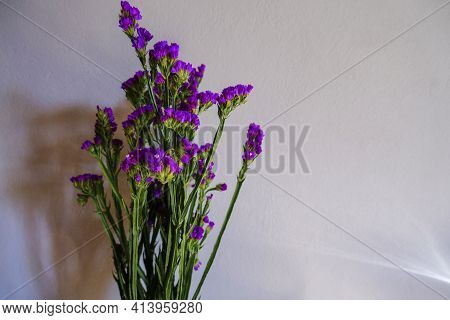 Bouquet Of Purple Statice Flowers Across White Wall Background. Copy Space. Holidays, Birthday, Moth