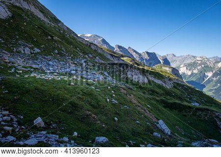Sheeps In Alpine Pasture, Pralognan La Vanoise, French Alps