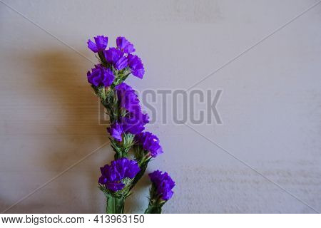 Single Statice Purple Potpourri Flower On White Background. Top View. Copy Space. Holidays, Birthday