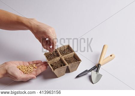 Planting Seeds In Pots With Soil With Your Hands